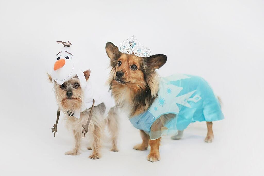 5 Costume Ideas for Your Pooch