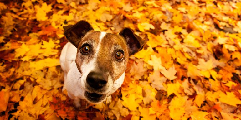 What Food You Can and Can't Share with Your Dog on Thanksgiving