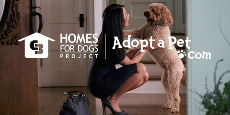 Renewing a Commitment to Find Homes for Dogs