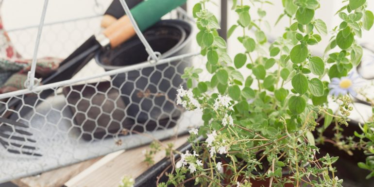 Seven Cool Gardening Tips for a Hot Summer